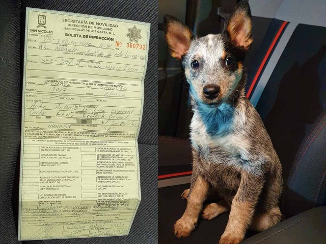 Llevaba a su cachorro de copiloto y policía lo multó
