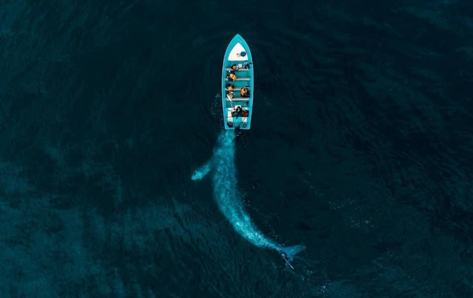 Tehuacanero suma otro galardón a nivel mundial con  fotografía de la ballena gris