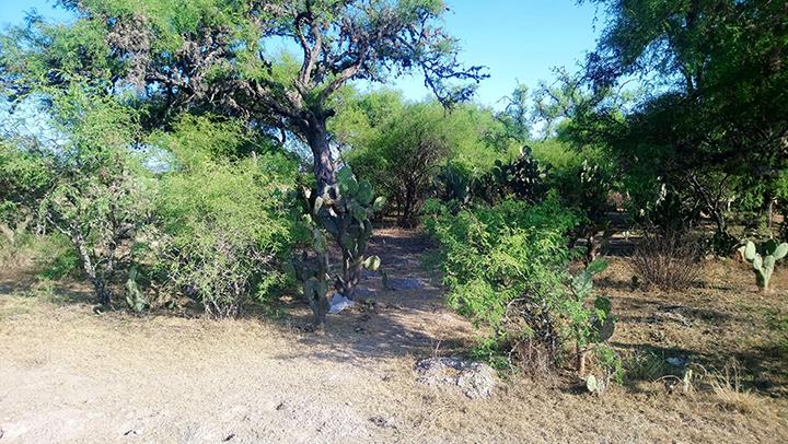 Localizan cadáver de hombre en terrenos de cultivo en Tochtepec