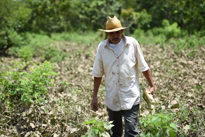 Cabañuelas se usan todavía en Izúcar para pronosticar el clima