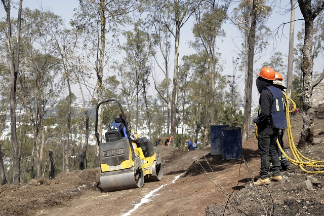 Derribarán 100 árboles por nuevo fraccionamiento en Amalucan