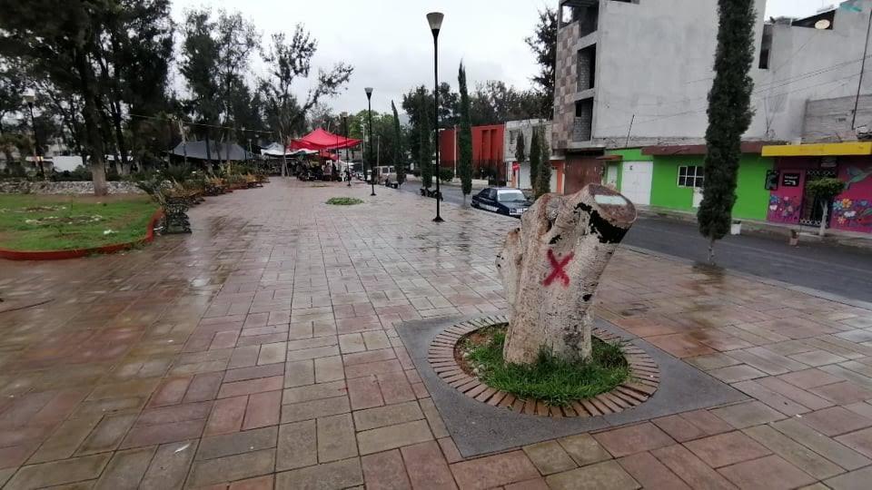 Arrasa plaga de Hongo Negro con árboles de Tehuacán