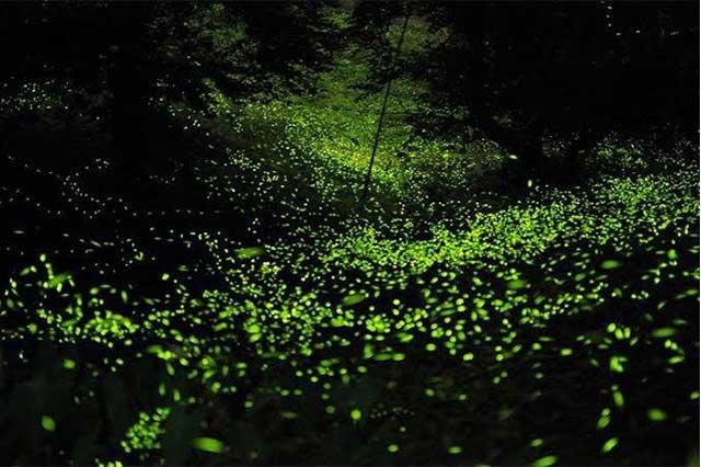 Reactivarán visitas a las luciérnagas en la región de Texmelucan