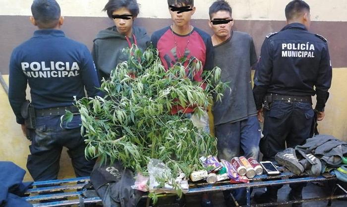 Detienen a ladrones menores de edad e incautan marihuana en azúcar