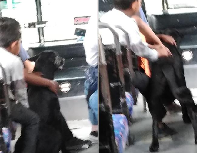 Viral, imagen de perrito que siguió a sus dueños hasta el transporte público
