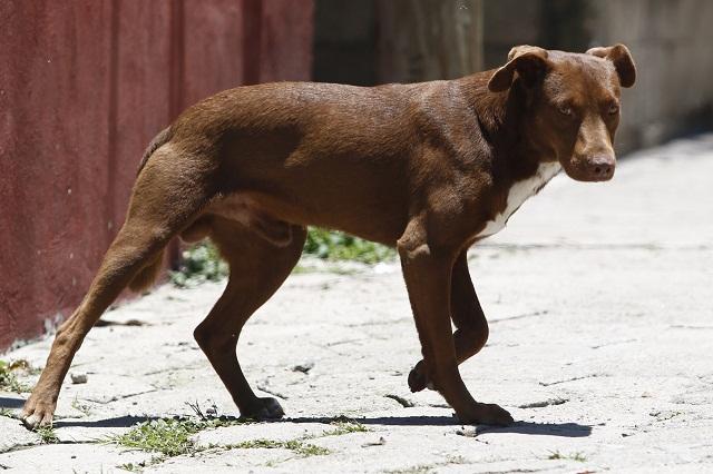 En San Andrés aplicarán esterilización y vacunación de perros callejeros