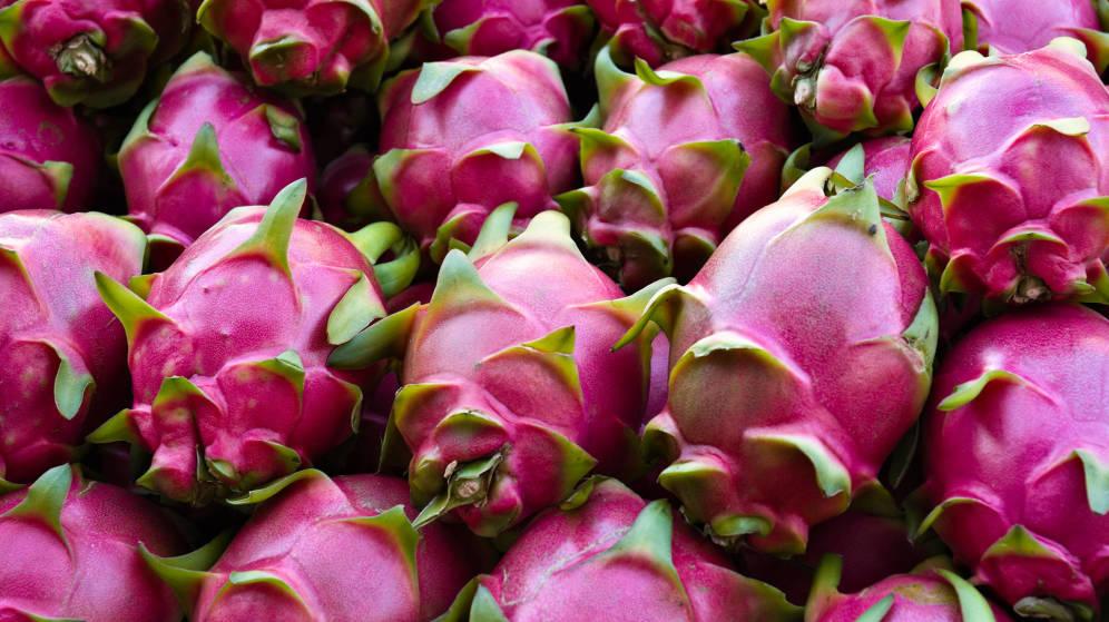 En plena feria de la Pitahaya acusan altos costos del fruto