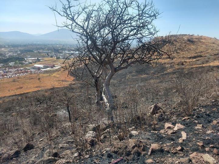 Tras incendio provocado descubren animales quemados en Atlixco