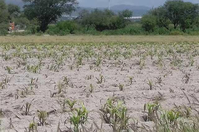 Con dispersión de químicos avioneta inhibe lluvia en Tehuacán