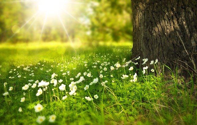 En esta fecha comenzará el equinoccio de primavera