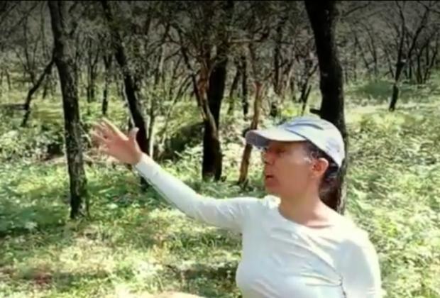 VIDEO Alertan de ecocidio por inmobiliarias en Puebla
