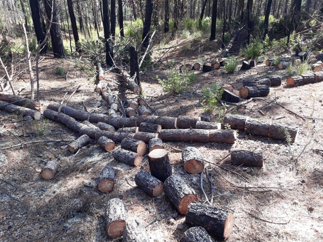 En el Verde aseguran madera y supuestos taladores le prenden fuego