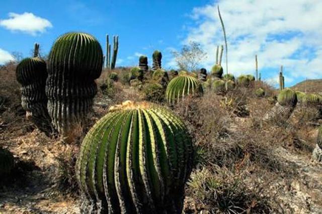 Más de 52 tiraderos clandestinos contaminan la Reserva de la Biosfera