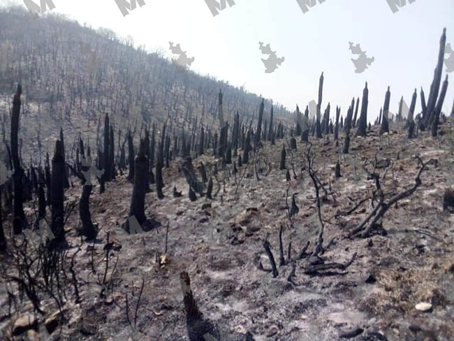 Incendio en Tlacotepec y Juan N. Méndez ha devastado más de 200 hectáreas