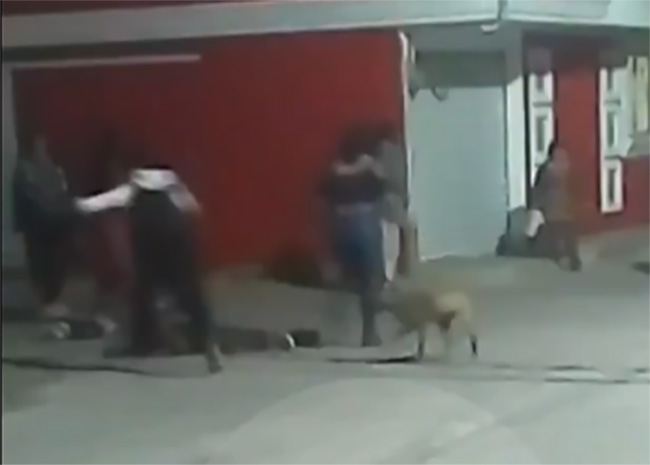 VIDEO Captan riña callejera de madrugada en El Verde