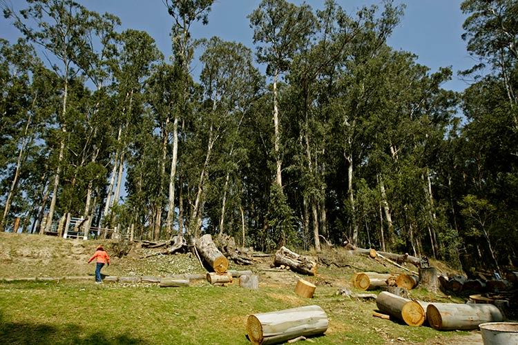 Puebla es el séptimo productor maderable en México: Semarnat