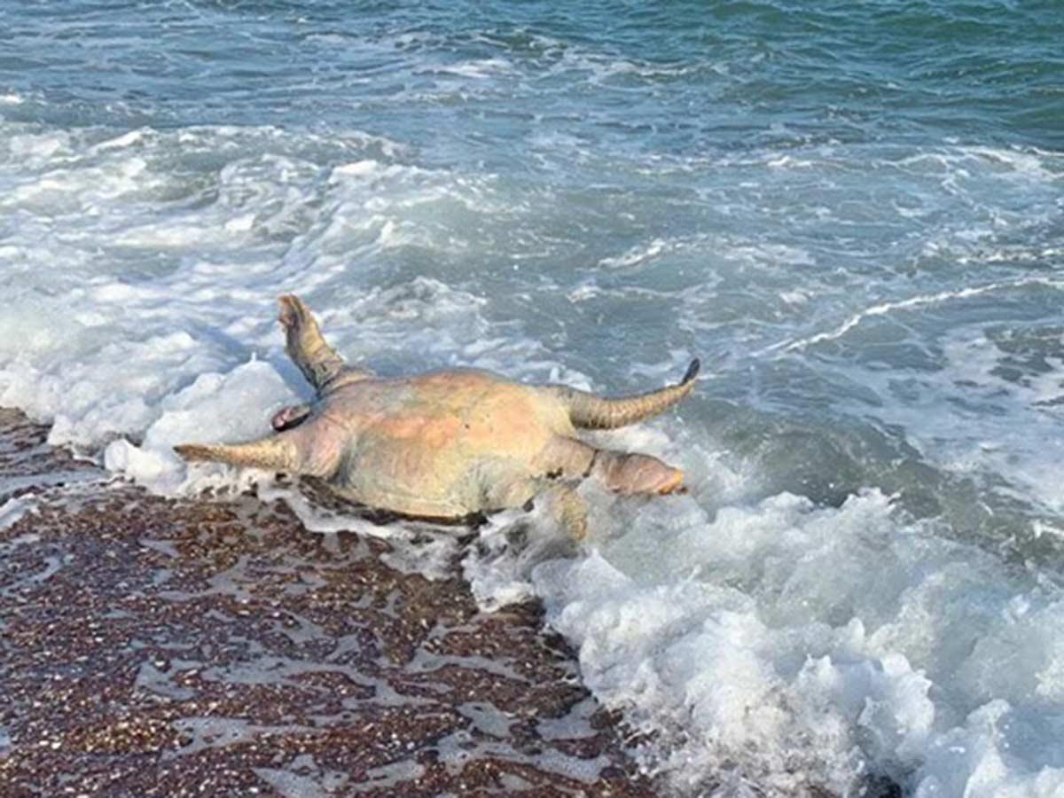 Agonizan animales marinos por derrame tóxico de Grupo México