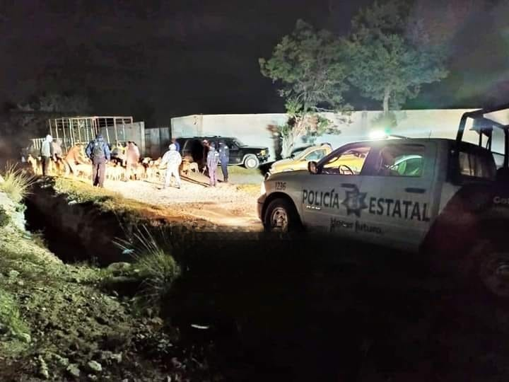Recuperan 100 cabezas de ganado robadas en Tepeyahualco