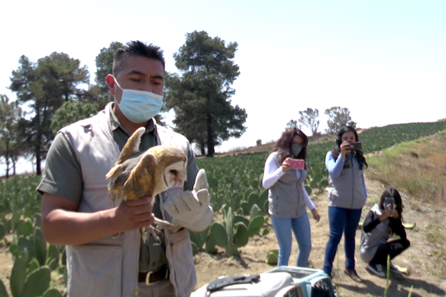 En 6 años Uma Konkon de la BUAP reintegra a su hábitat a casi 50 aves