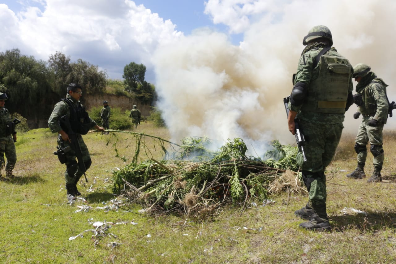 Sedena quema plantíos de marihuana en Acajete