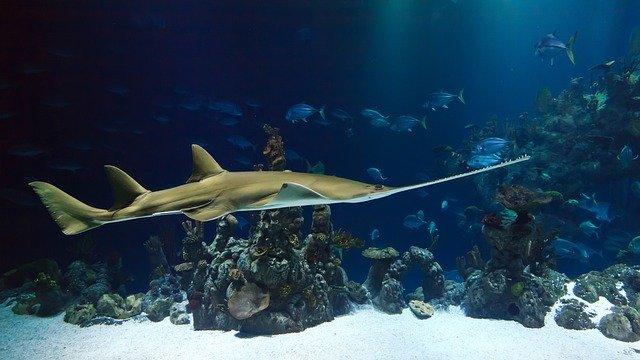 Este sábado abre sus puertas el acuario Michin Puebla