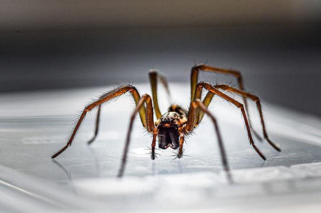 VIDEO Graban araña gigante en estación del metro en la CDMX