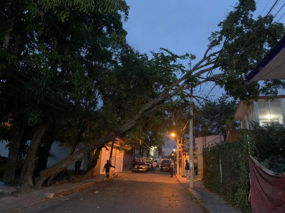 Ráfagas de viento tiran árbol en barrio de Izúcar