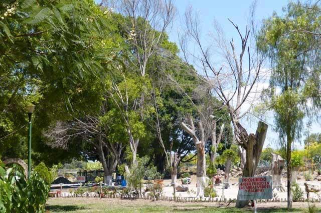 Autoridades municipales descuidan árboles de Tehuacán, señala el Igavim