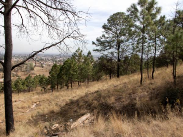 Plantarán 30 mil árboles en la Reserva Estatal Cerro Zapotecas