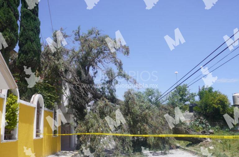 Fuertes vientos genera la caída de árboles en Tecamachalco