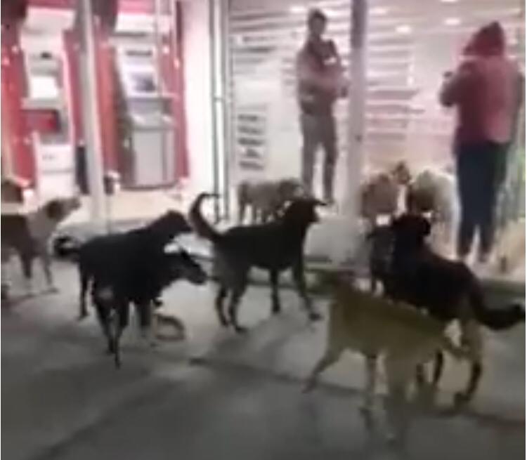 Otro ataque más de perros ahora en Rafael Lara Grajales