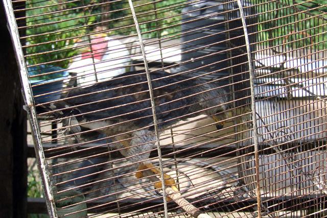 BUAP busca combatir el comercio de animales exóticos en internet