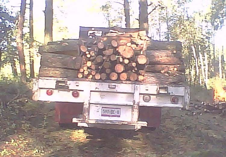 Ejidatarios de Tlahuapan denuncian tala indiscriminada en área natural protegida