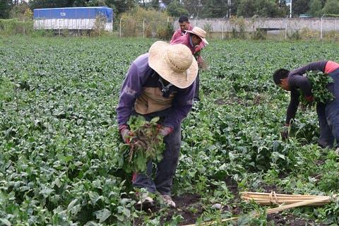 Trabajadores agrícolas de El Verde se preparan para trabajar en Canadá