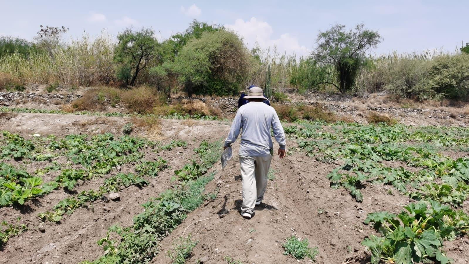 Preparan 700 hectáreas de legumbres para exportar de Tehuacán a EU