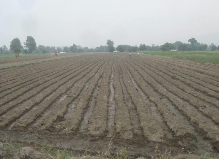 Escasez de lluvia y bajas ventas preocupa a campesinos en Texmelucan