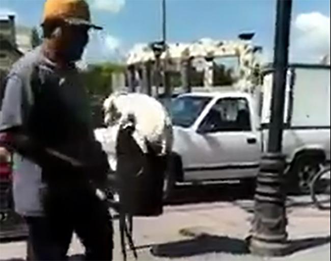 VIDEO Hombre corta cola a perro con tijeras de podar en Huehuetlán