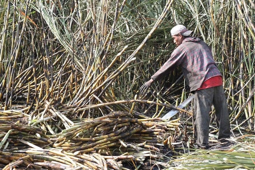 Pandemia frena llegada de cortadores de caña a ingenio de Atencingo
