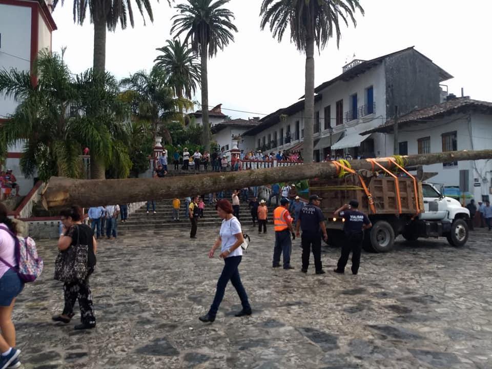 En ritual cortan y trasladan árbol de voladores en Cuetzalan