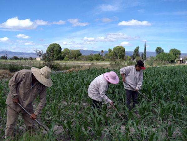 De 2011 a 2018 se pagaron 2 mil mdp para seguros agrícolas en Puebla