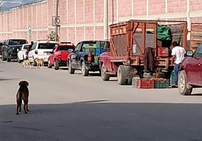 Productores se instalan afuera de la Central de Abastos de Huixcolotla