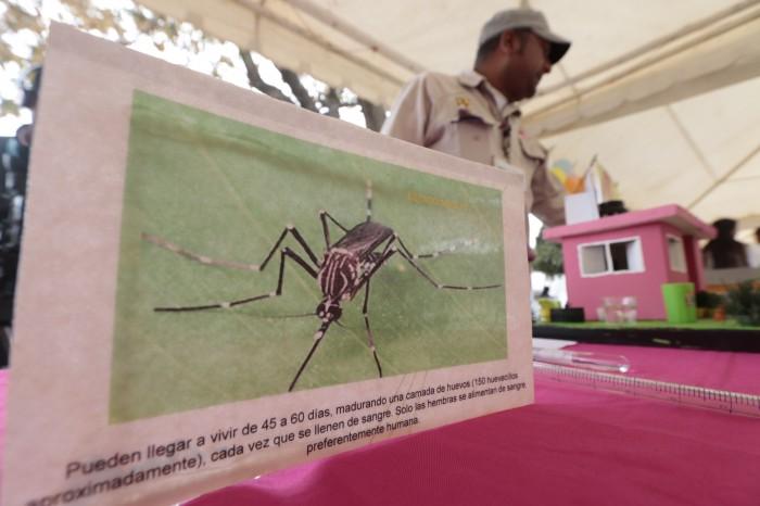 Temporada de dengue 2019 en México está próxima a concluir