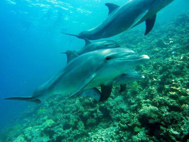 Recompensa de 20 mil dólares por asesinos de delfines