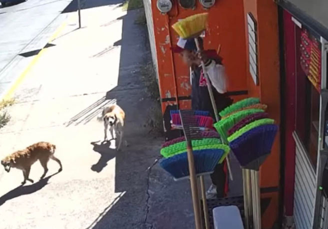 Captan en video al roba escobas de Atlixco