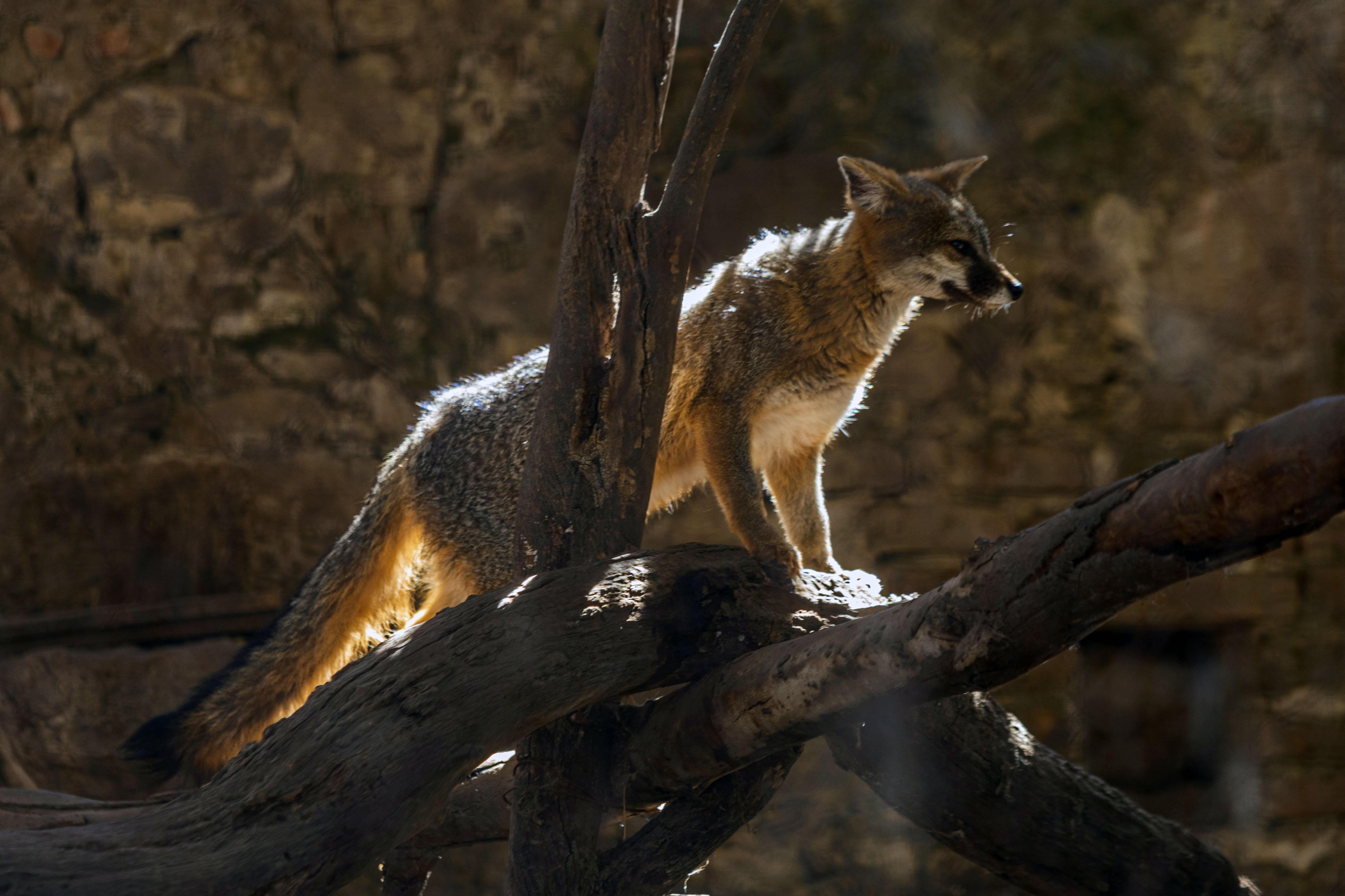 Flor del Bosque, una nueva oportunidad de vida para las especies