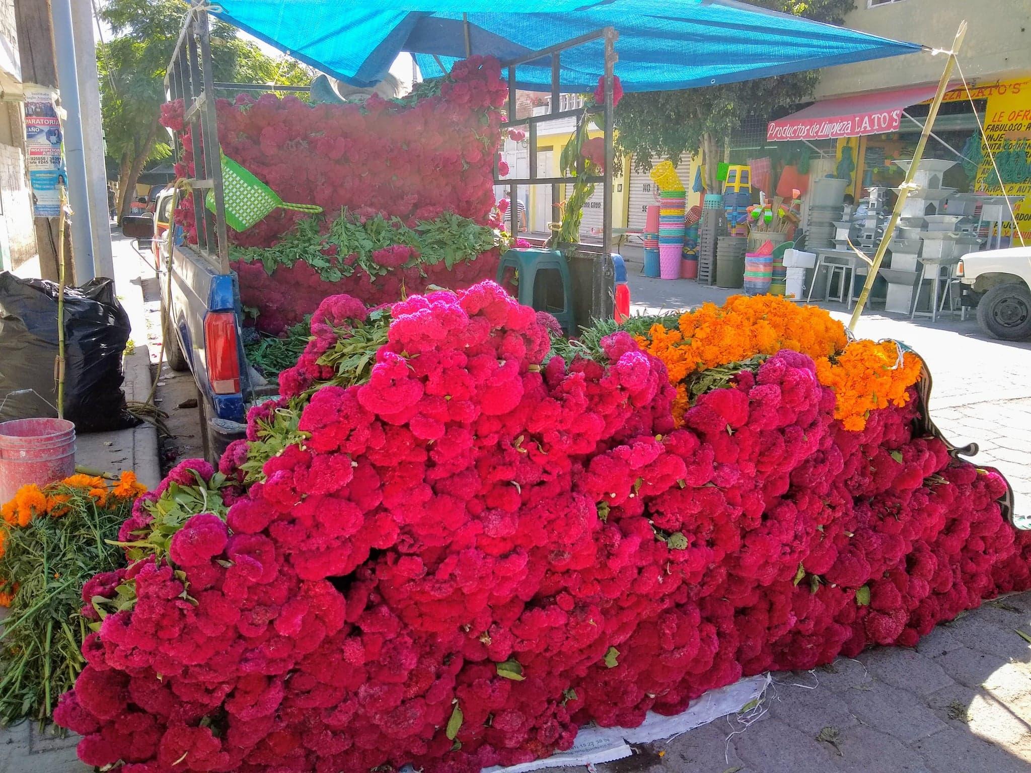 Aumenta precio de la flor de cempasúchil en Tehuacán por poca producción