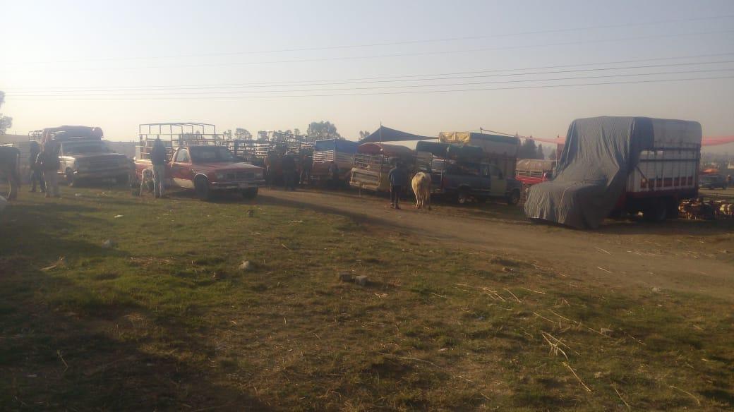 Tianguis de ganado reincide y comerciantes evaden sana distancia en Texmelucan