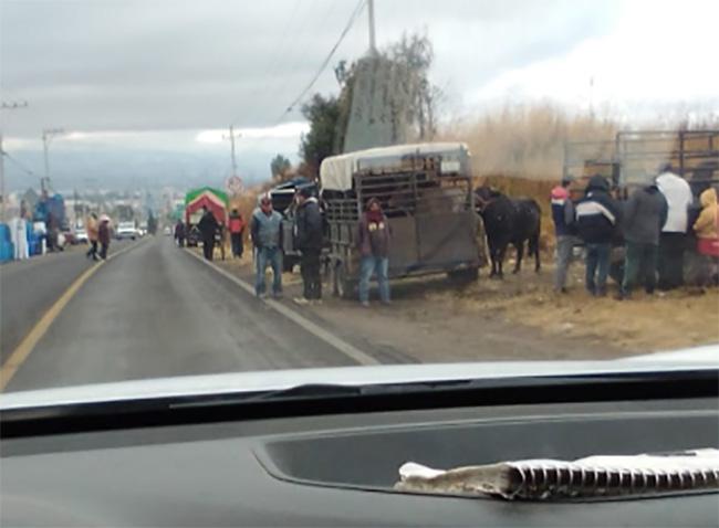 Se desborda el tianguis de ganado en Villa Alta en Texmelucan