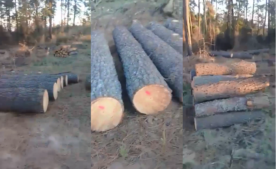 Reforzarán vigilancia para contrarrestar tala ilegal en Tlahuapan