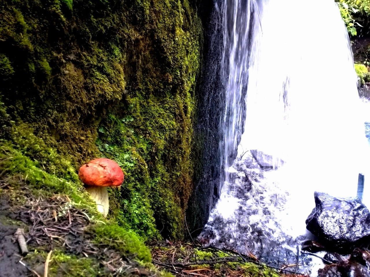 Hongos silvestres de Puebla: vida o muerte en un bocado
